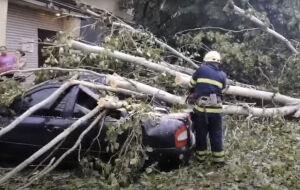 Падение деревьев и поврежденные авто: последствия непогоды на Днепропетровщине